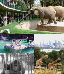 zoo_animals_SHblog