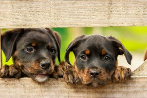 puppy mills | Courses on Animal Welfare Science, Ethics and Law